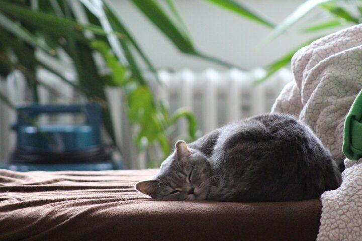 Do Cats get Heatstroke?